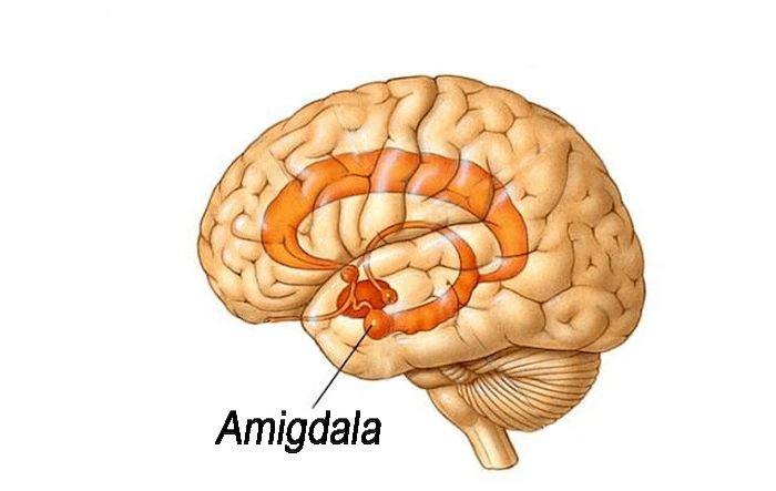 Claustrofobia-Amigdala